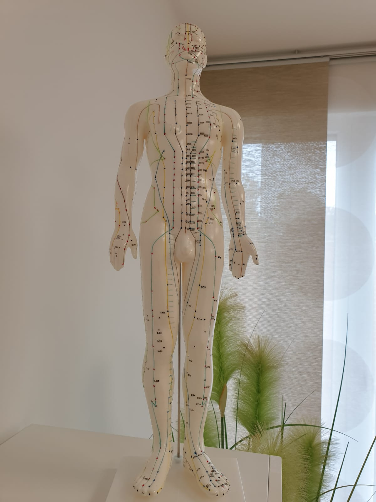 Körpermodell mit den Akupunktur-Meridianen